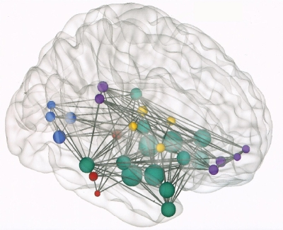 Brain connectivity